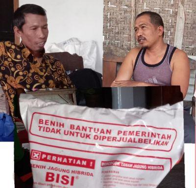 Miris, Bantuan Benih Jagung di Desa Kali Sumber Diperjual Belikan oleh Gapoktan Nakal