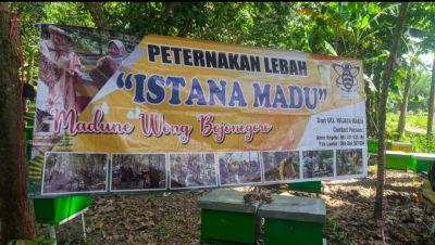 Sentra Madu Lebah di Sukosewu, Konsumen Hingga Riau